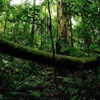 Quanto sopravvivrebbero gli uomini se tutte le piante scomparissero?