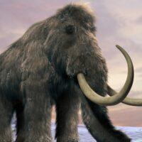 Come sono morti gli ultimi mammut?