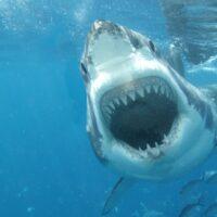 Come dovrebbe essere fatta una tavola da surf anti-squali?
