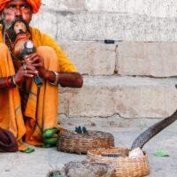 La musica incanta i serpenti?