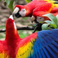 Perché i pappagalli sono colorati?