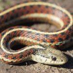 Anche i serpenti possono essere amici tra di loro?