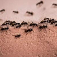 Le formiche non si riposano mai?